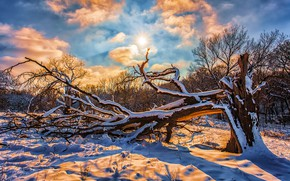 Картинка зима, лес, небо, солнце, облака, снег, деревья