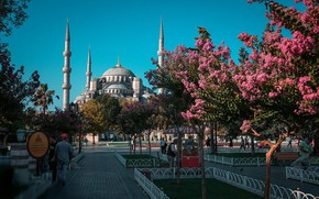Картинка парк, Турция, цветущие деревья, Daria Klepikova, Cтамбул