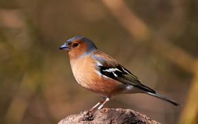 Картинка фон, птица, птичка