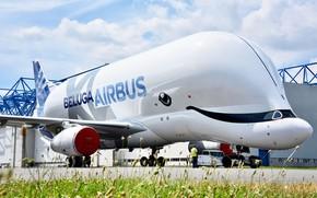 Картинка самолет, самолёт, Грузовой, Airbus, Beluga, A300, Airbus Beluga, Super Transporter, Beluga XL, грузовой самолёт Airbus, …
