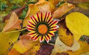 Картинка Leaves, Yellow flower, Жёлтые листья, Жёлтый цветок