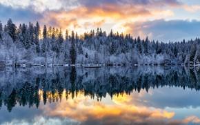 Картинка зима, лес, озеро