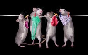 Обои поза, белье, веревка, труселя, крысы, носки, колготки, трусы, черный фон, мыши, нижнее, прищепки, квартет, стирка, ...
