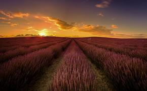 Картинка поле, небо, солнце, облака, лучи, свет, пейзаж, закат, цветы, природа, перспектива, Франция, даль, вечер, горизонт, …