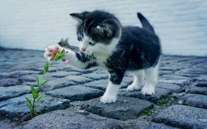 Картинка flower, kitten, cat, kitty, feline