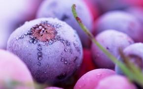 Картинка природа, еда, ягода