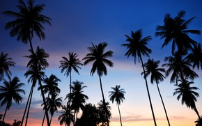 Картинка море, пляж, лето, закат, пальмы, берег, силуэт, summer, beach, sea, sunset, seascape, beautiful, paradise, palms, ...
