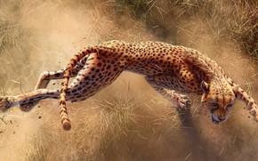 Картинка Когти, Гепард, Gepard, Africa s deadliest, Хищники Африки