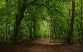 Картинка деревья, фото, листва