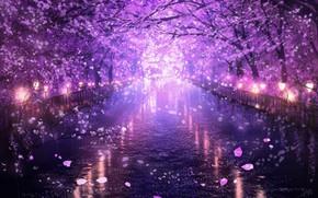 Картинка вода, вечер, сакура, цветение