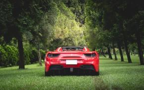 Картинка трава, деревья, красный, спорткар, вид сзади, Ferrari 488 Spider