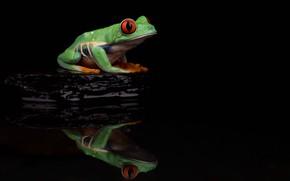 Картинка вода, отражение, камень, лягушка