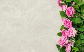 Картинка цветы, розы, лепестки, розовые, wood, pink, flowers, petals, roses