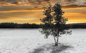 Картинка зима, поле, дерево