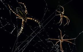 Картинка макро, природа, пауки