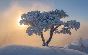 Картинка Mgła, Śnieg, Zima, Drzewo