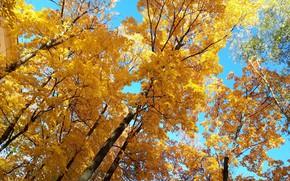 Картинка небо, Деревья, осенние листья