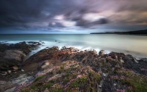 Картинка море, цветы, скалы, побережье