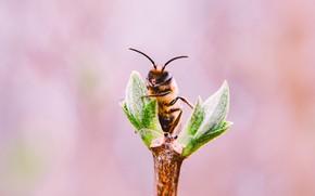 Картинка Пчела, Растение, Растения, Насекомое, Flora, Plants, Close-up, Insect, Флора, Plant, Bee, by Lisa Fotios, Honey …