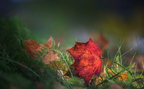 Картинка трава, листья, боке