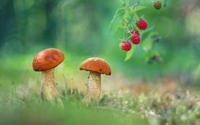 Картинка малина, фото, грибы