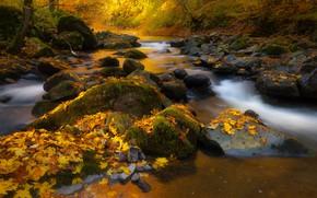 Картинка осень, лес, листья, природа, ручей, камни