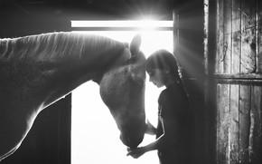 Картинка свет, лошадь, девочка, light, girl, horse, Alessandro Cereda