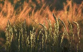 Картинка осень, трава, природа