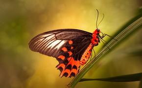Картинка листья, макро, желтый, фон, узор, бабочка, обработка, оранжевая, насекомое, травинка, боке, яркая