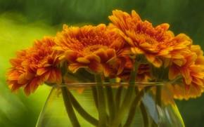 Картинка цветы, букет, ваза, оранжевые, герберы