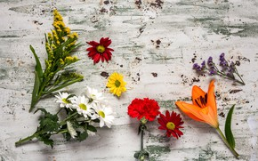 Обои цветы, colorful, wood, flowers, composition, floral