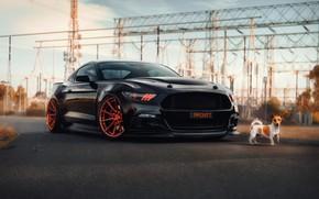 Картинка Mustang, Ford, собака