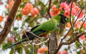 Картинка цветы, ветки, зеленый, птица, попугай, розовые, цветение, боке