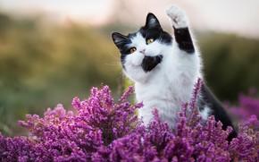 Картинка кошка, кот, взгляд, морда, цветы, природа, поза, фон, черно-белый, лапа, котик, розовые, котэ, желтые глаза, …