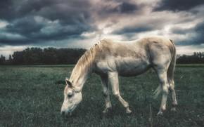 Картинка природа, конь, лошадь, белая