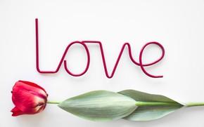 Картинка любовь, цветы, тюльпан, love, flowers, beautiful, romantic, tulip