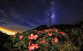 Картинка листья, звезды, цветы, горы, ночь, природа, холм, Млечный путь, Азия, кусты, звездное небо, азалия, рододендроны