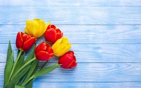 Картинка цветы, желтые, тюльпаны, красные, red, yellow, wood, flowers, tulips