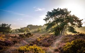 Картинка небо, трава, солнце, облака, свет, деревья, природа, Великобритания, вереск