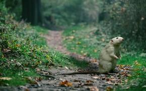 Картинка зелень, лес, лето, трава, листья, ветки, природа, поза, коллаж, лапки, мышь, мышка, серая, тропинка, кусты, …