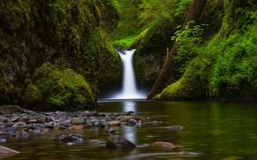 Картинка река, камни, водопад, мох, Орегон, бревно, Oregon, Columbia River Gorge, Eagle Creek, Punch Bowl Falls, …