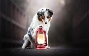 Картинка друг, собака, фонарь
