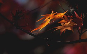 Картинка осень, листья, ветки