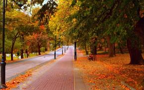 Картинка Дорога, Осень, Деревья, Скамейка, Фонари, Парк, Fall, Листва, Park, Autumn, Road, Trees, Leaves
