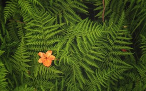 Картинка папоротник, цветочек, листья