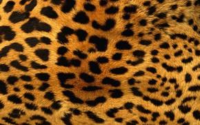 Картинка Wallpaper, Leopard, Texture, Animals