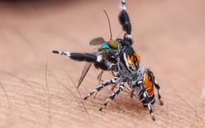 Картинка макро, фон, паук, насекомое, добыча