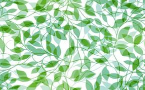 Картинка белый, листья, фон, текстура, зеленые