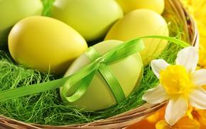 Картинка яйца, Пасха, бант, easter, нарицисс