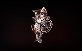 Картинка Минимализм, Котенок, Очки, Кот, Стиль, Велосипед, Арт, Art, BMX, Style, Котёнок, Cat, Kitten, Bike, Minimalism